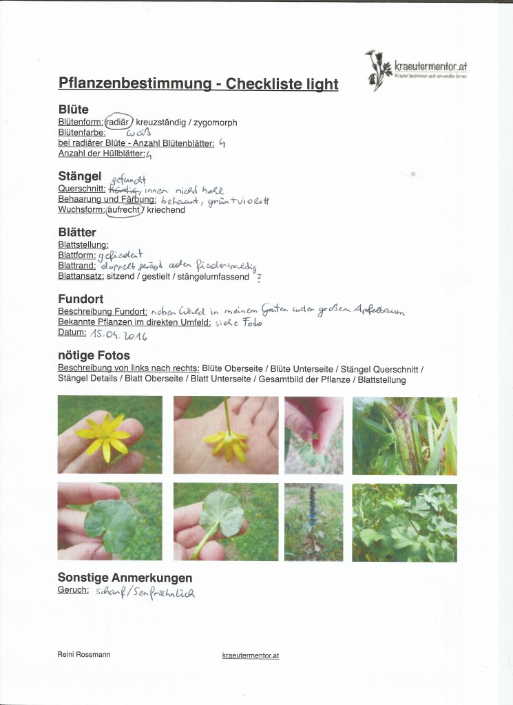 15.04.2016_ Unbekannte Pflanze Pflanzenbestimung Checkliste light