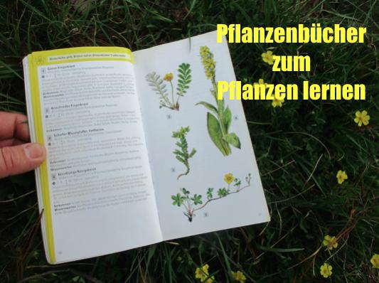 Pflanzenbestimmungsbuch – Meine Tipps